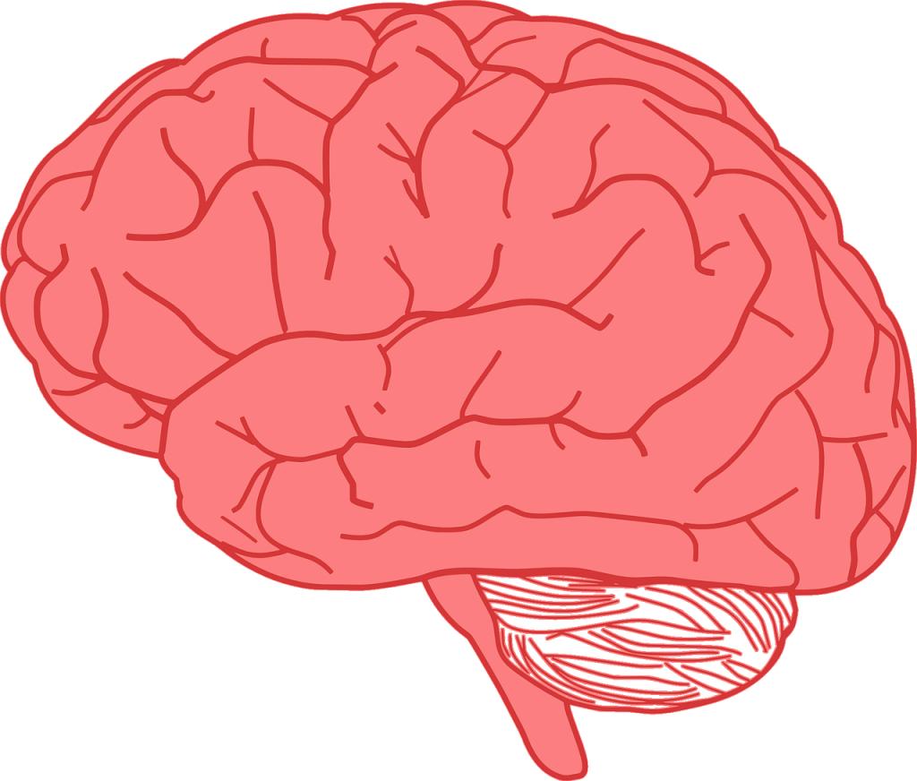 brain-155656_1280