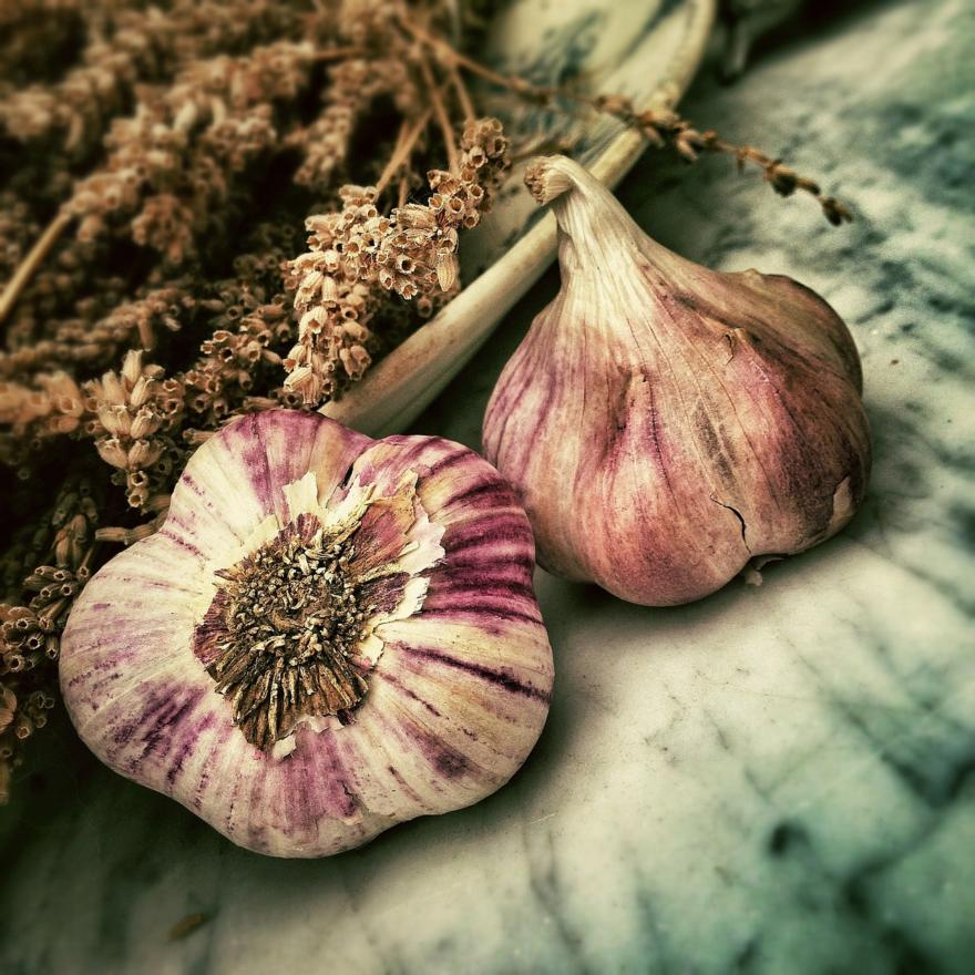 Związki fitochemiczne zawarte w czosnku i cebuli, zapobiegają wystąpieniu oraz namnażaniu różnych form nowotworów, szczególnie raka przełyku i żołądka