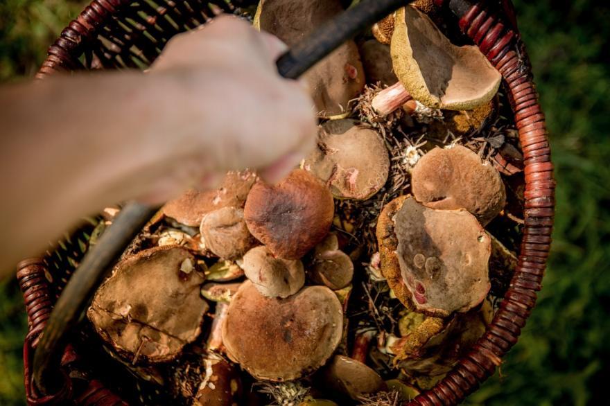 W niektórych gatunkach grzybów (np. w boczniaku), znajdują się substancje, które działają przeciwzapalnie i przeciwwirusowo oraz regulują stężenie cholesterolu we krwi