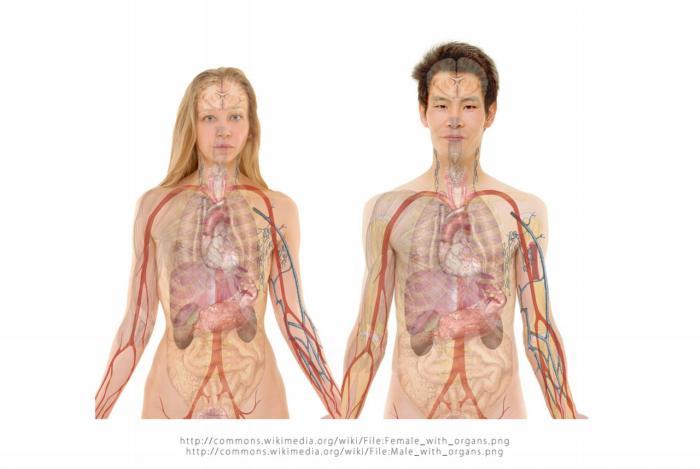 Organizm człowieka, do prawidłowego funkcjonowania, potrzebuje zachowania odpowiedniego pH krwi, które waha się pomiędzy 7,35 a 7,45.
