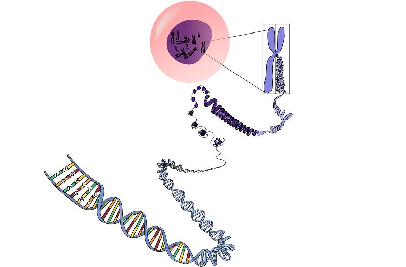 Wpływ genetyki na niepłodność